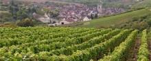 beautiful-guestsrooms-burgundy-wine