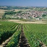 saint-bris-vineyard-burgundy